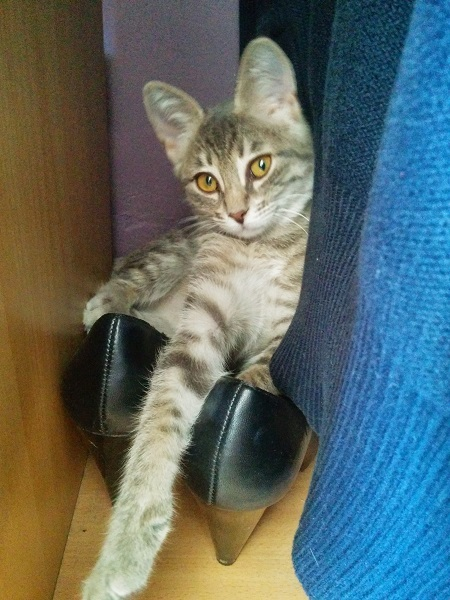 gribouille relaxing in some shoes