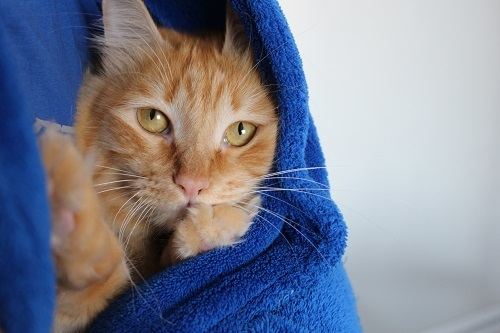 Kali wrapped in a blue blanket