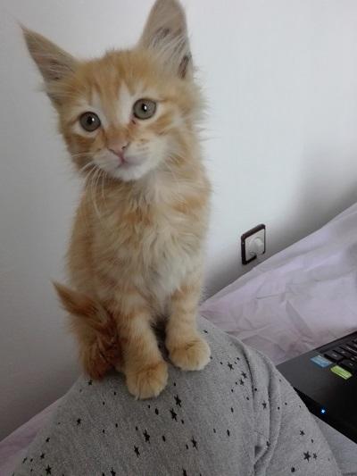 Kali as a kitten being very fluffy