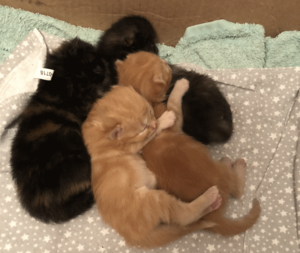 two pairs of kittens all cuddled up together