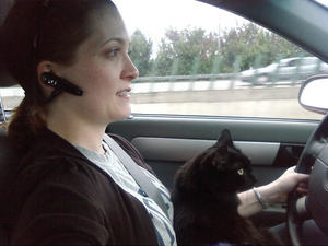 Audrey helping drive the car