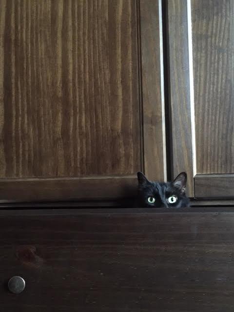 Audrey hiding in a shelf