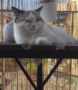 Mowzer relaxing on the balcony