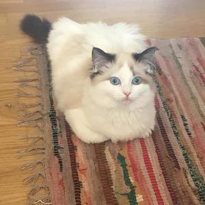Mowzer relaxing on the rug