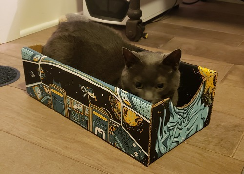 My cat beast relaxing in a catbox