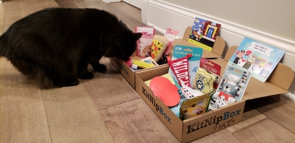 lexi sniffing the kitnipbox