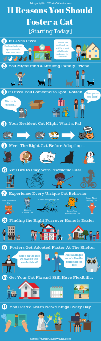 11 reasons to foster a cat infographic
