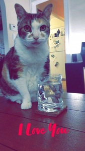 Tidbit and her water glass