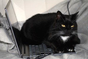 a cat sitting on a laptop