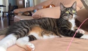 Mako, the resident cat