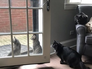 All four cats looking out the door