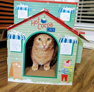 Duke the orange cat in his house