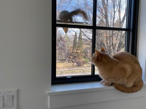 Duke checking out Stan the Squirrel