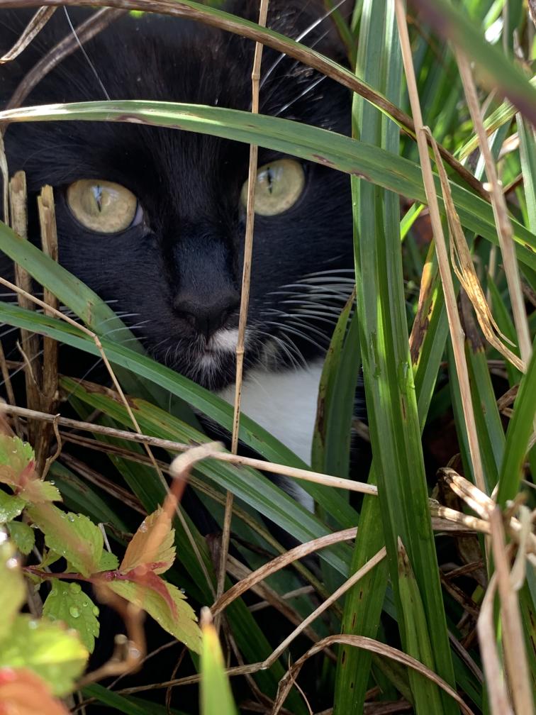 Billbert playing hide and seek