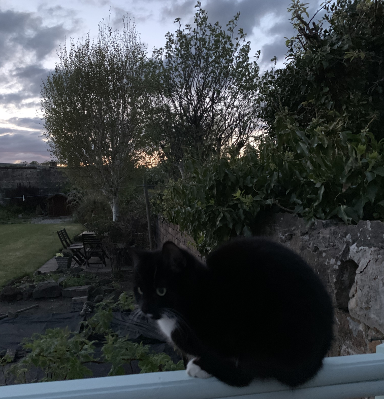 Billbert on the balcony